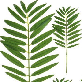 Artificial Pogonatherum Palm Leafpsd