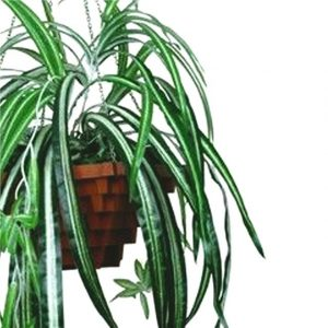 artificial-variagated-spider-plant
