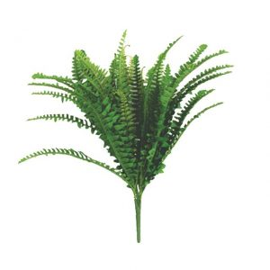 boston-fern-plant