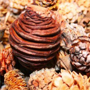 pine-cone-autumn-mixture-net