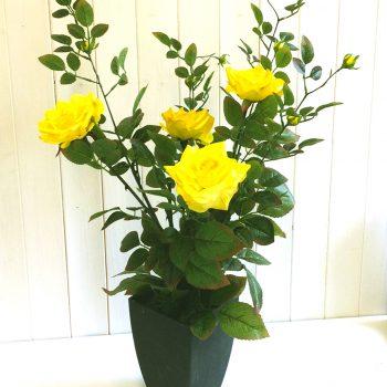 artificial-rose-bush-in-black-modern-pot