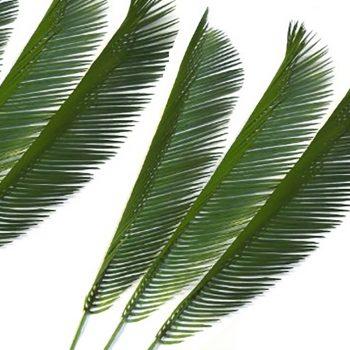Artificial Cycas Palm Leaf