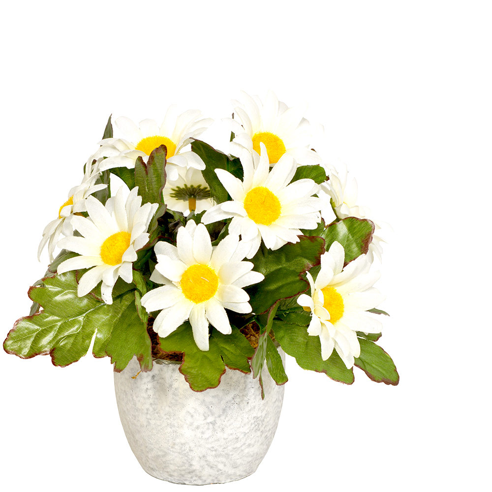 Artificial Daisy Plant In Round Pot White Flowers Shelf Edge