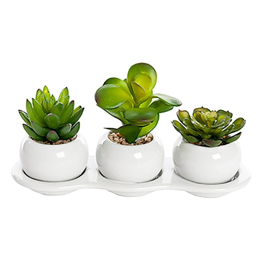 Set Of 3 Artificial Succulent Plants In Ceramic White Tray