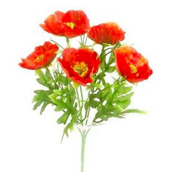 bright red small poppy bush