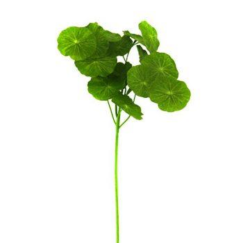 Artificial Geranium Leaf Spray