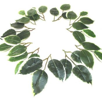 Artificial Variegated Ficus Leaves