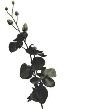 Artificial Silk Black Orchid Stem