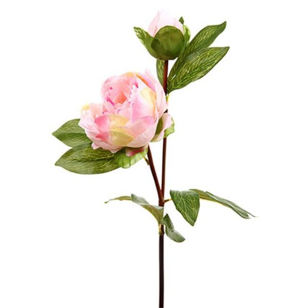 pale pink peony stem with leaf foliage