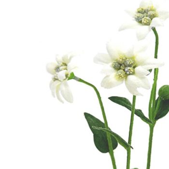 white artificial edelweiss spray