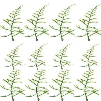 plastic artificial asparagus fern leaves