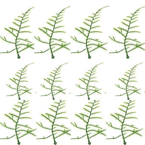 plastic artificial asparagus fern leaves