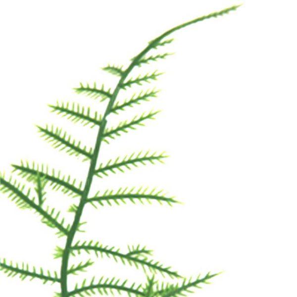 artificial asparagus fern leaf
