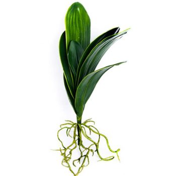 Artificial Large Orchid Leaves With Roots