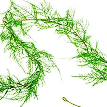 Artificial Asparagus Fern Garland