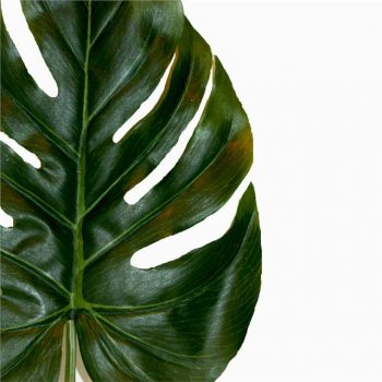 close up of a fake Swiss cheese plant leaf