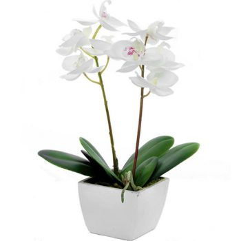 This Artificial Potted Purple Orchid with gorgeous fuschia-coloured silk flowers and green leaf foliage comes in a stylish white pot planter.