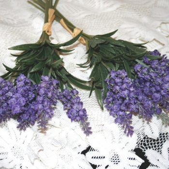 Lavender in Bloom Bundle