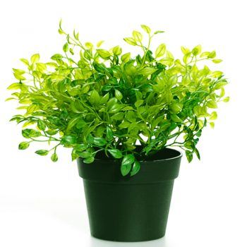 artificial oregano plant