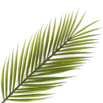 Artificial Kentia Palm Leaf
