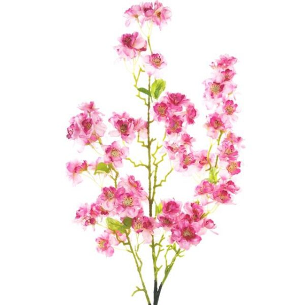 cherry blossom branch with hot pink flowers