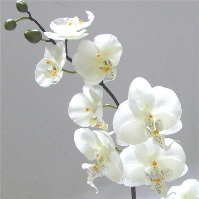 Artificial Potted Orchid In Bowl Cream Flowers Shelf