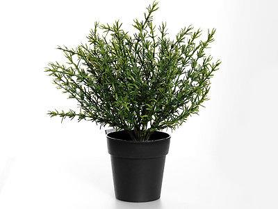 potted artificial thyme plant