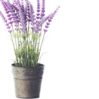 potted artificial lavender