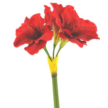 Artificial Red Amaryllis