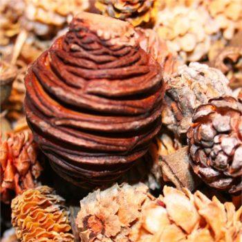 Autumn Pine Cone Foliage Decorations