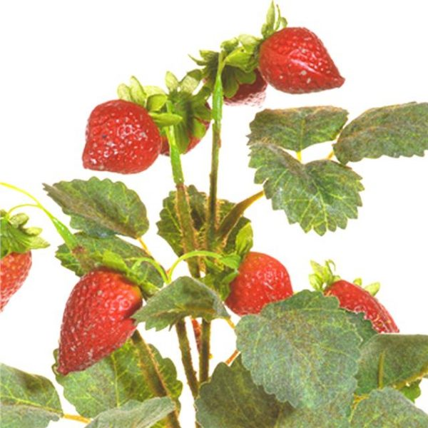 fruit and leaves on an artificial strawberry pick