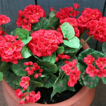 Artificial Red Geranium Plant