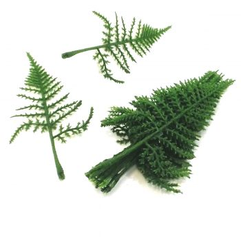 asparagus fern leaves