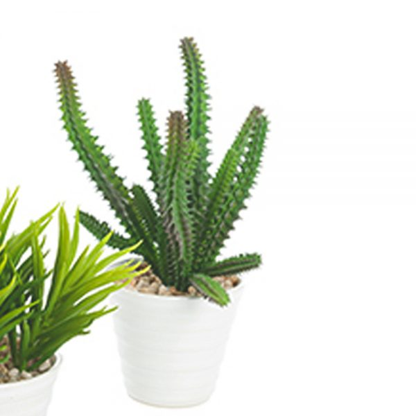 tall, dark green artificial succulent plant