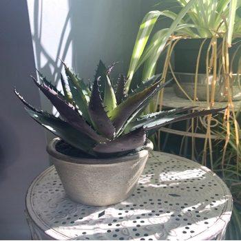 Artificial Agave Succulent Plant