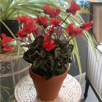 Artificial Potted Red Cyclamen Plant