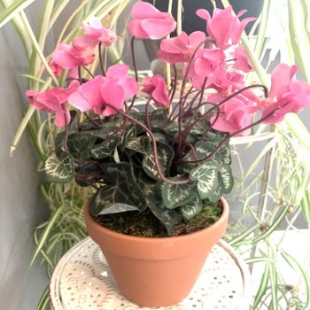 Artificial Potted Pink Cyclamen Plant