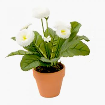 Artificial White Bellis Daisy