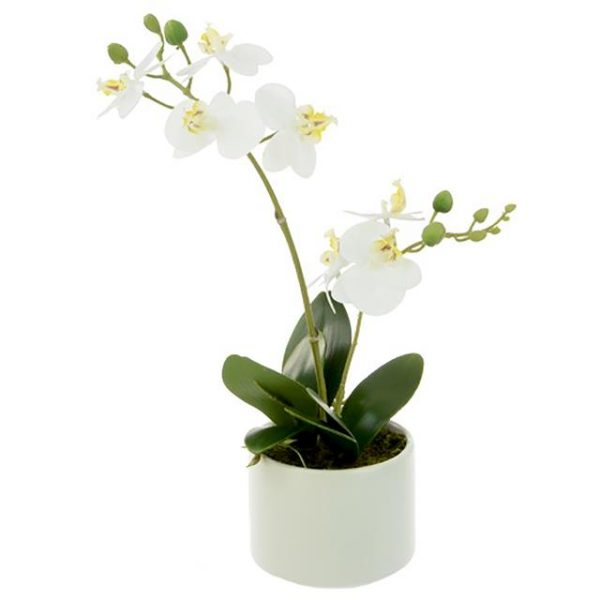 potted white artificial orchid