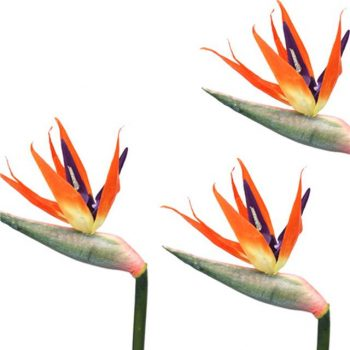 artificial bird of paradise stems