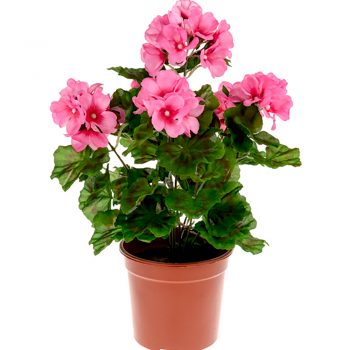 potted artificial pink geranium