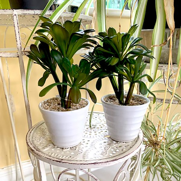 two artificial umbrella succulent plants