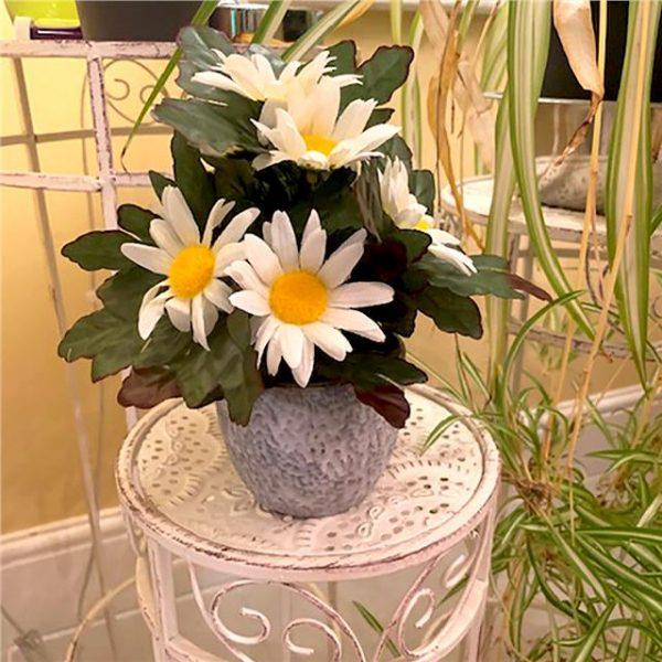 artificial daisy plant