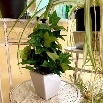 artificial green ivy plant in a white pot