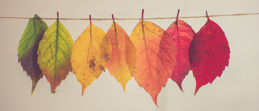multicoloured leaves for autumn decorating tips