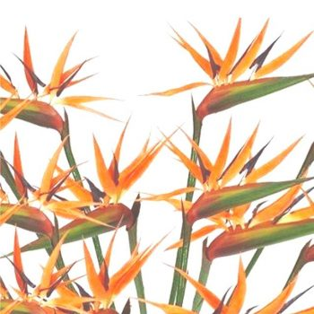 12 Artificial Bird of Paradise Flowers