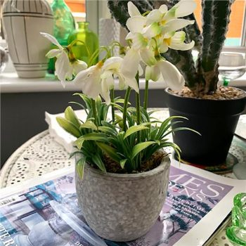 potted artificial snowdrop flowers