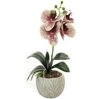 Artificial Harlequin Potted Orchid
