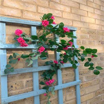 Artificial Trailing Hot Pink Mini Rose Bush