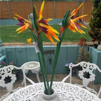 Artificial Bird of Paradise Flowers - Set of 4 80cm